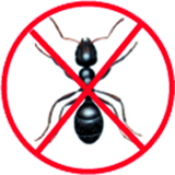anti fourmis rabat